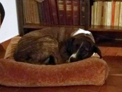 brandy-adopted2