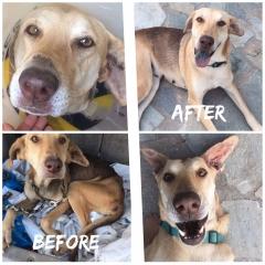 daizi-before-after