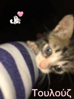 γατα3